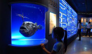 ac駿河湾の深海生物展示場_00101