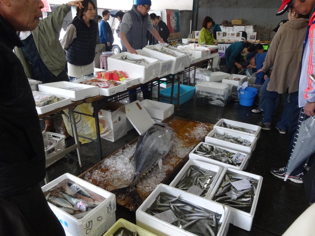 朝獲れ地魚